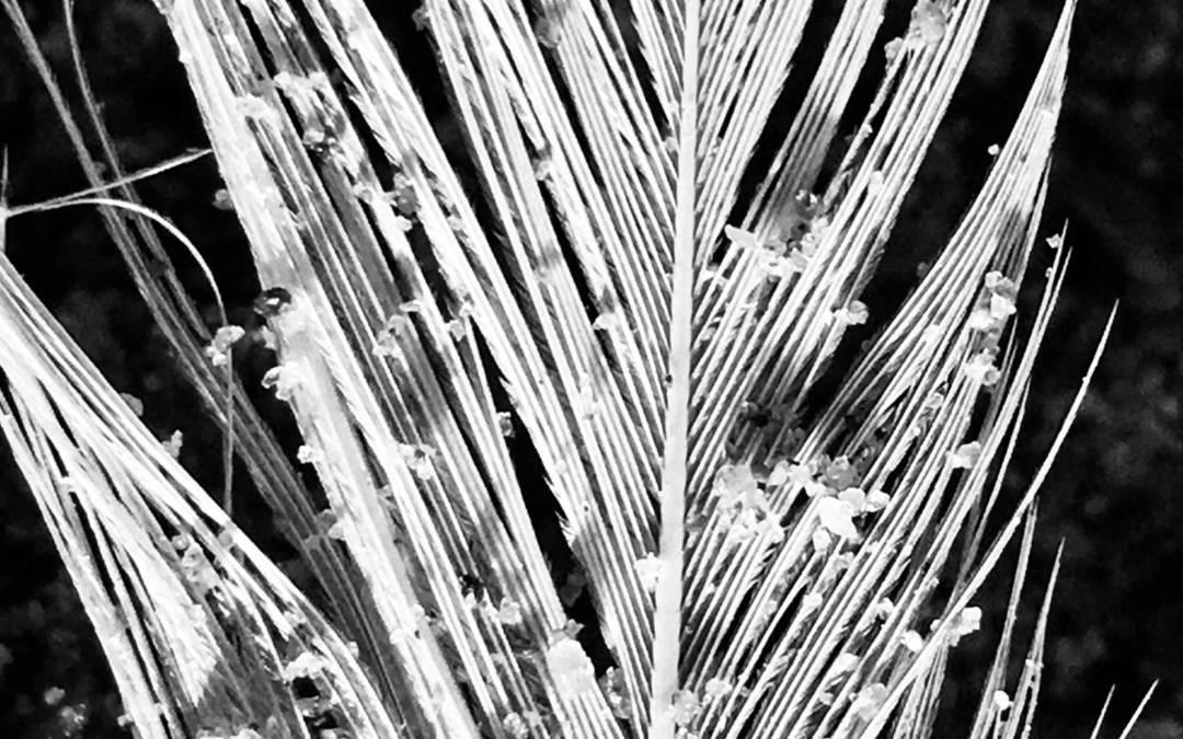 Poèmes photographiques en noir et blanc - Gislaine Ariey - Printemps 2021